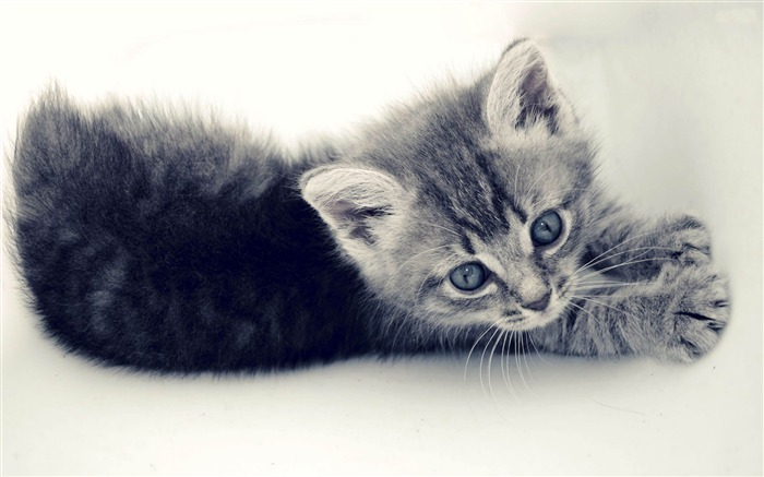 kitten-Animal photography wallpaper Views:5577