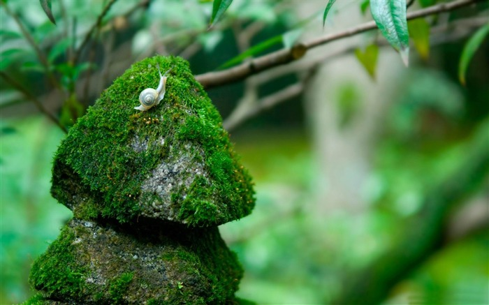 snail on stone-Animal photography wallpaper Views:4829
