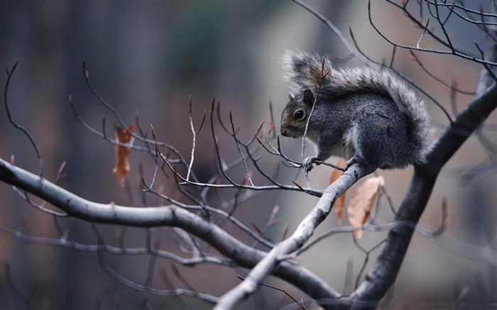 squirrel in tree-Animal photography wallpaper Views:5369
