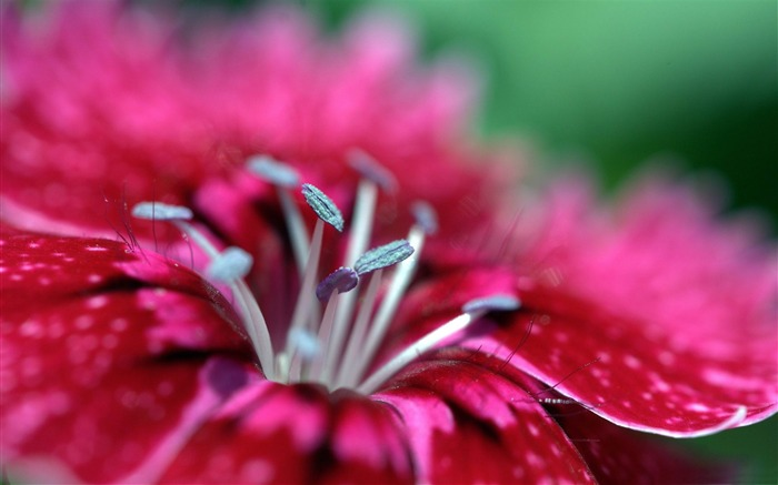 Macro photography theme desktop wallpaper Views:13052