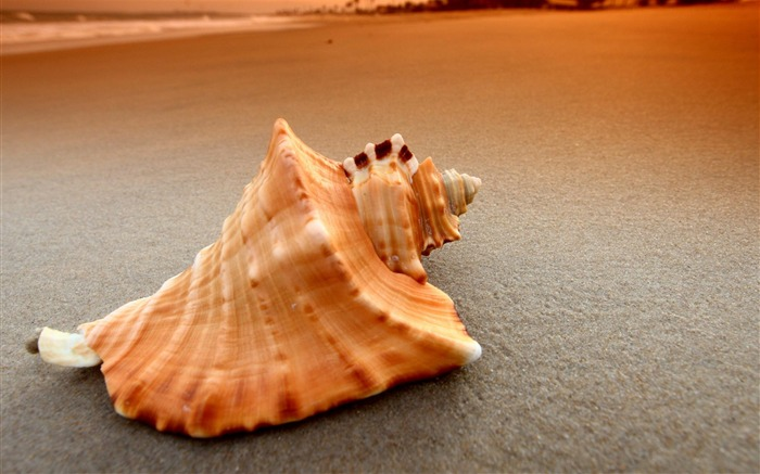 Shell-High Quality wallpaper Views:6478 Date:7/14/2012 12:17:39 PM