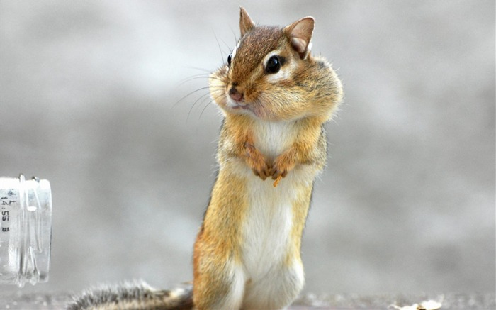 Squirrel Standing-Animal wallpaper Views:12223 Date:7/27/2012 2:15:04 AM