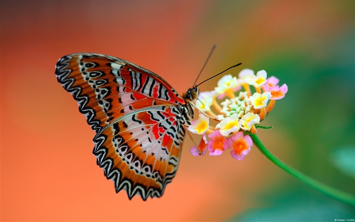 butterfly on flower-Animal wallpaper Views:6252 Date:7/27/2012 2:04:19 AM