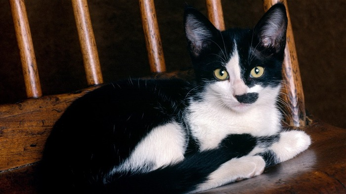 cute black and white cat-Animal wallpaper Views:10976 Date:7/27/2012 2:06:52 AM