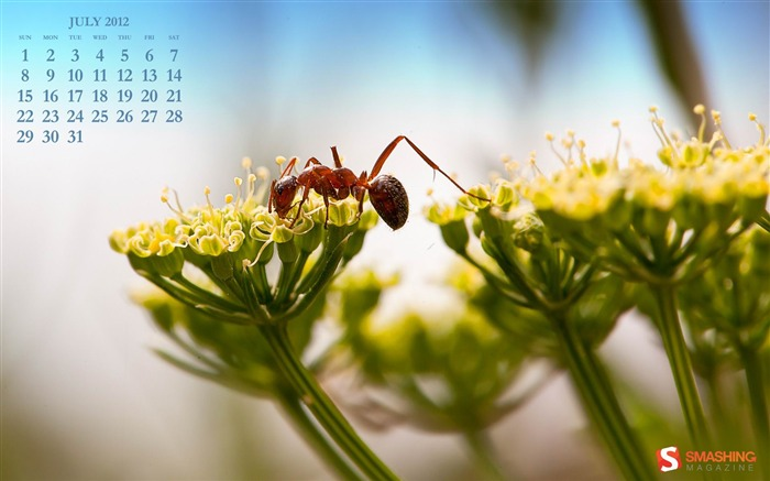 picnic-July 2012 calendar wallpaper Views:4690 Date:7/1/2012 2:02:21 AM