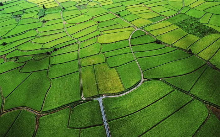 The green rice fields of the low-altitude aerial-Mac OS Wallpaper Views:57112 Date:8/16/2012 1:18:49 AM