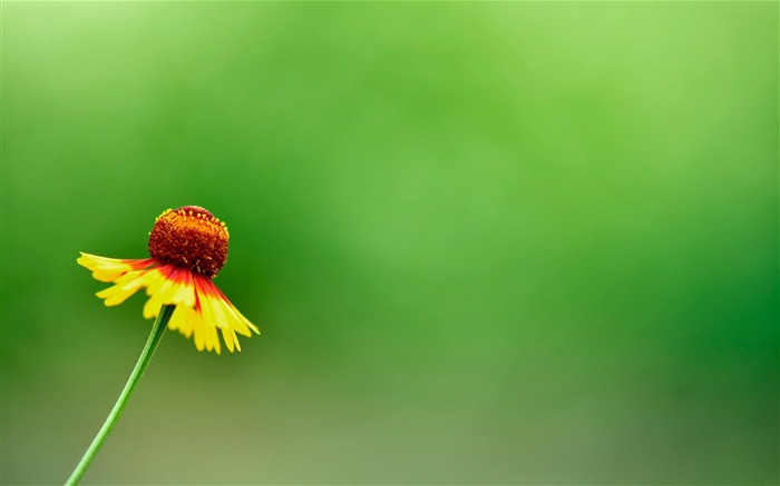 Yellow Summer Flower-Flower Desktop wallpaper Views:3169