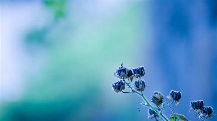amazing blue flower-Flower Desktop wallpaper Views:4922