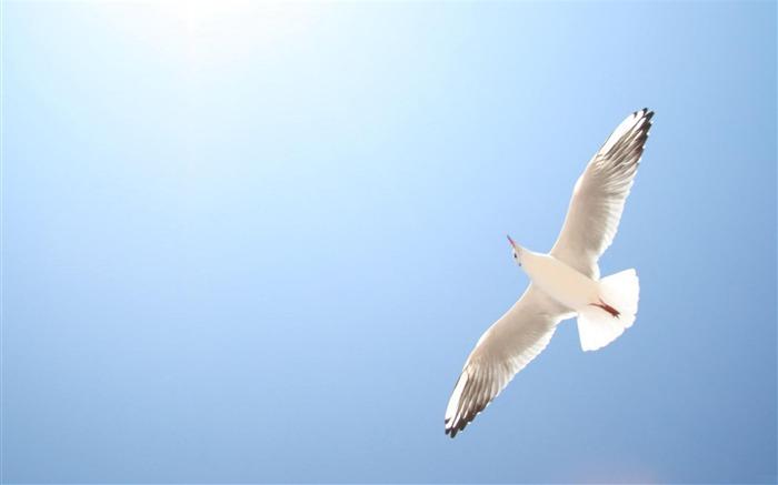 Birds Flying in The Sky Pigeon Fly Blue Sky Birds