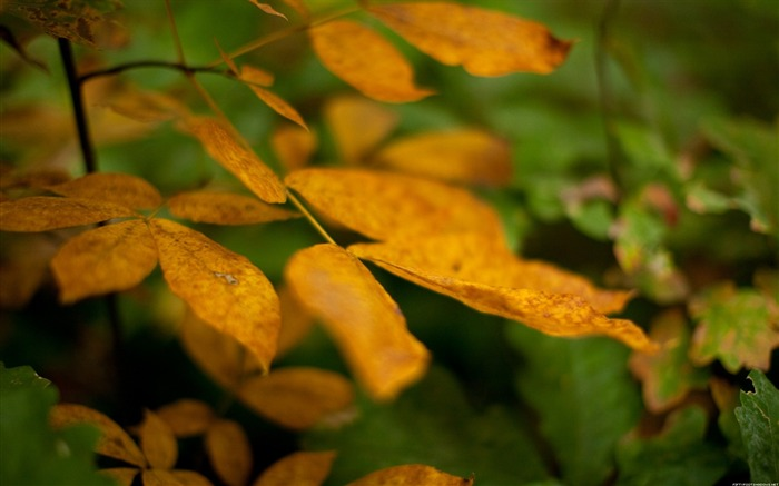Autumn Yellow leaves-Nature Photography Wallpaper Views:4237