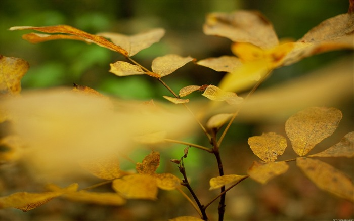 Autumn leaves-Nature Photography Wallpaper Views:4515
