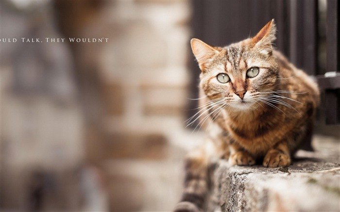 Cat Blur-Animal World Wallpaper Views:6764