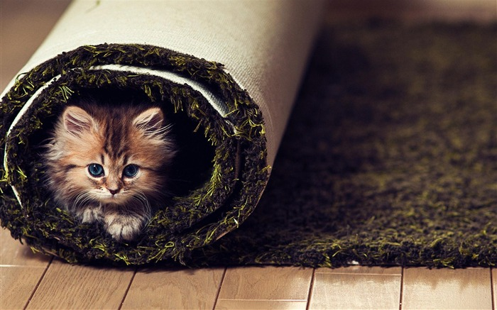 Cat Play Hide Cute-Animal World Wallpaper Views:9488