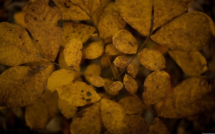 Decadent feeling leaves-Nature Photography Wallpaper Views:4202