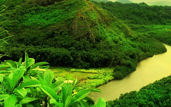 Green Mountain Trees River-plants photography wallpaper Views:10033
