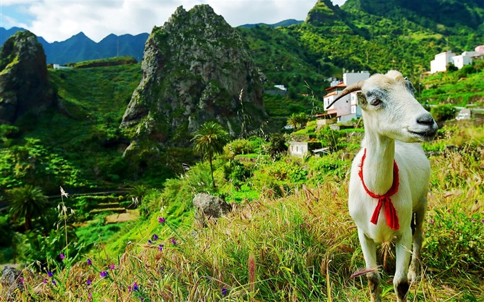 Hermigua Gomera Spain-Animal World Wallpaper Views:5608