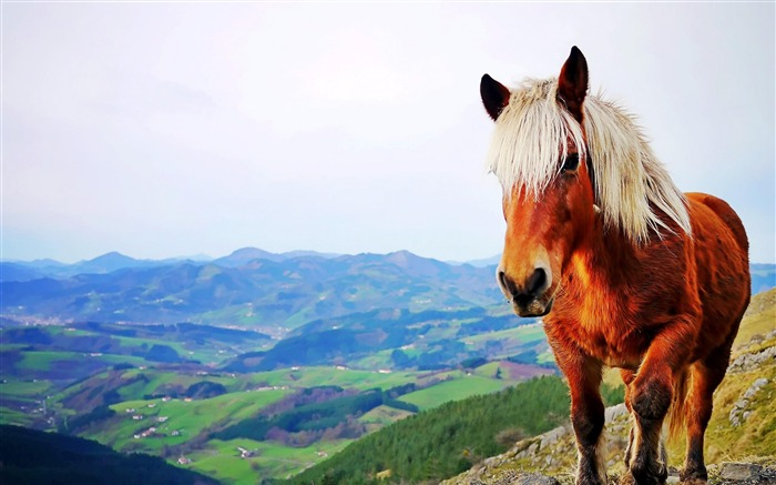 Iberian horse-Animal World Wallpaper Views:6547