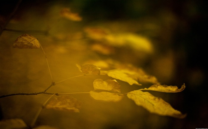 Late autumn-Nature Photography Wallpaper Views:6233