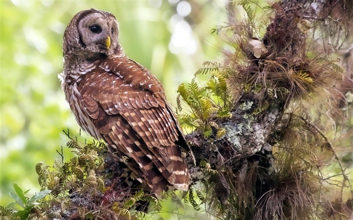 Owl Forest-Natural animal wallpapers Views:9900