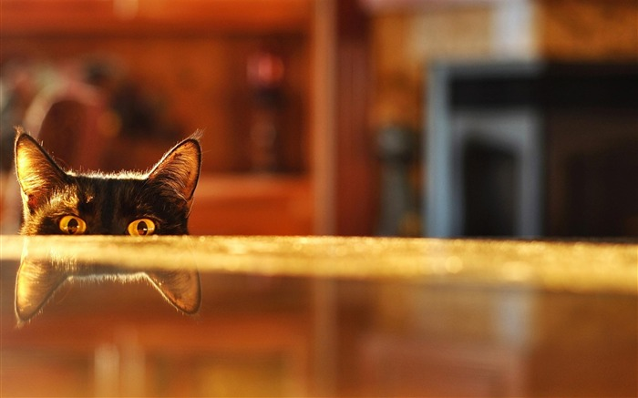 Peep curious kittens-wild animals photo wallpaper Views:6516 Date:9/10/2012 7:54:12 PM