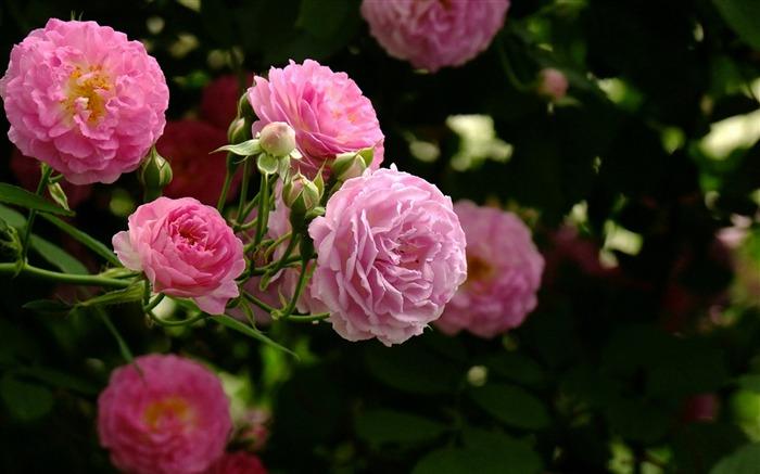 Love Pink Orchid Flower Romantic Wallpaper 24 3687 Hd: 2012 Beautiful Flowers Photography Wallpaper Album List