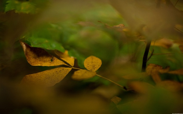 Yellow leaves-Nature Photography Wallpaper Views:4083