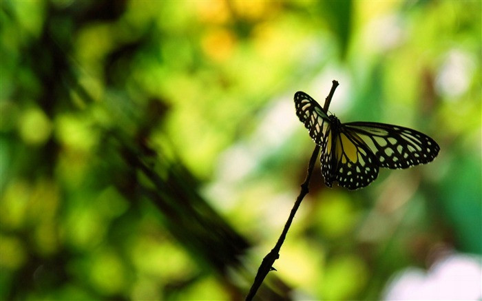 butterfly park-Animal World Wallpaper Views:4942