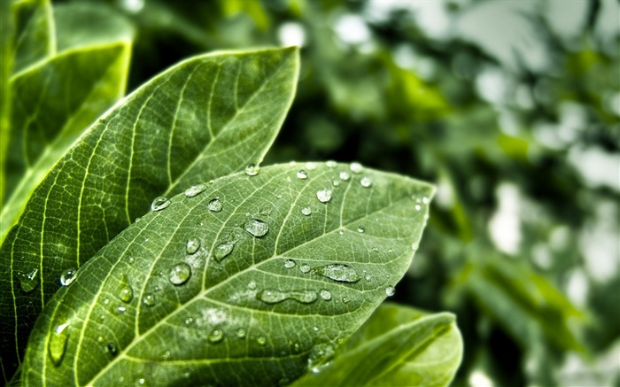 freshness leaves-plants photography wallpaper Views:5665