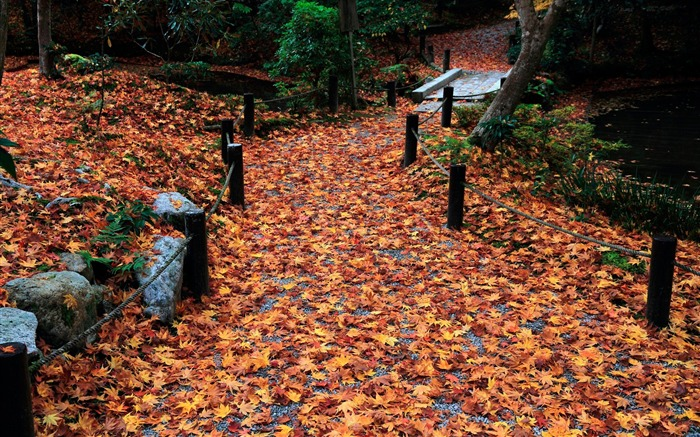 Alley-Enkoji Temple Autumn wallpapers Views:4442