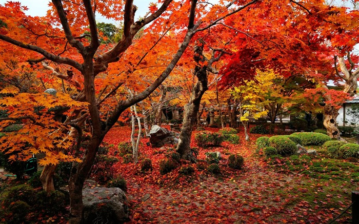 Colorful world-Enkoji Temple Autumn wallpapers Views:13586