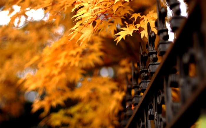 Autumn natural scenery theme wallpapers Views:17630