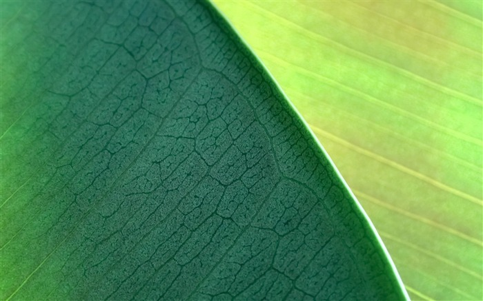 Green leaves-MAC OS X Mountain Lion HD Wallpapers Views:30793
