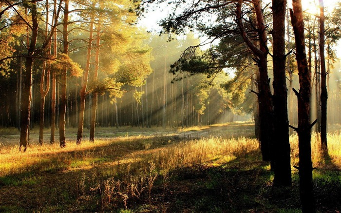 Morning Sunshine Forest-Autumn landscape widescreen wallpaper Views:28125 Date:10/16/2012 11:56:28 AM
