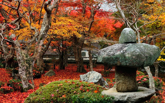 Red Maple Leafs-Enkoji Temple Autumn wallpapers Views:2262