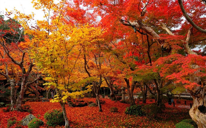 Red and yellow maple-Enkoji Temple Autumn wallpapers Views:30699