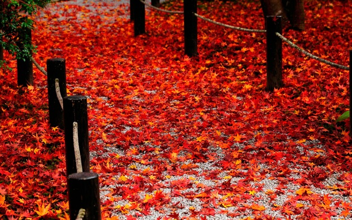 Red fallen leaves of the Road-Enkoji Temple Autumn wallpapers Views:9539