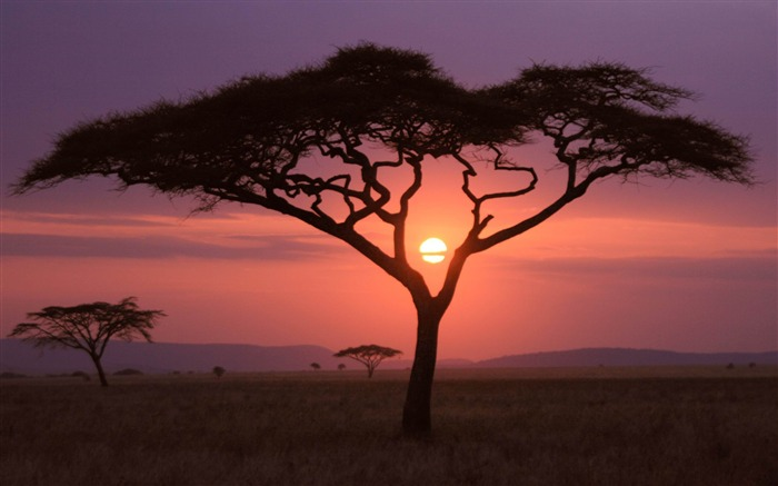 Sunset African grasslands-MAC OS X Mountain Lion HD Wallpapers Views:17444