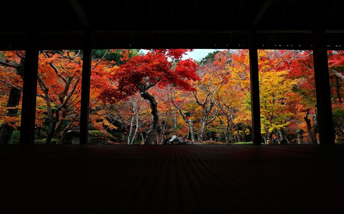 The 10 cattle Court-Enkoji Temple Autumn wallpapers Views:5807