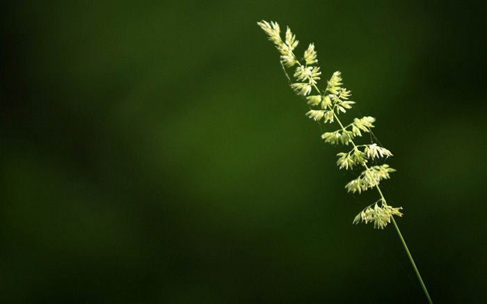 alone grass-plants photography Wallpaper Views:5478