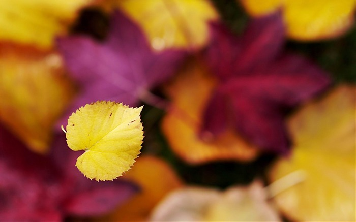 autumn leaves-plants photography Wallpaper Views:4246