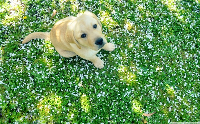 dog and spring-Animal Widescreen Wallpaper Views:35479