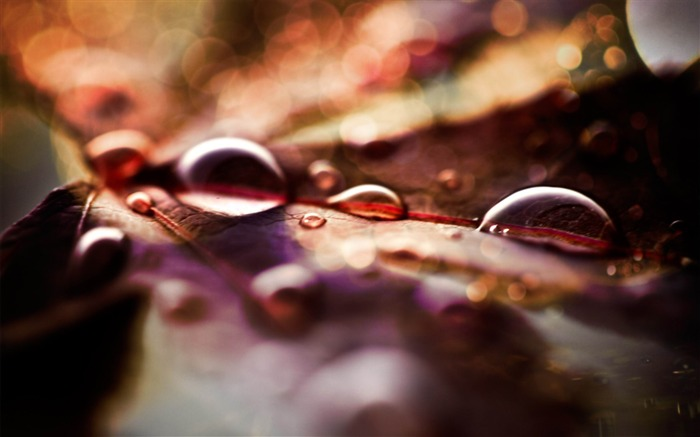fall leaves and raindrops-Autumn Nature Wallpapers Views:4962