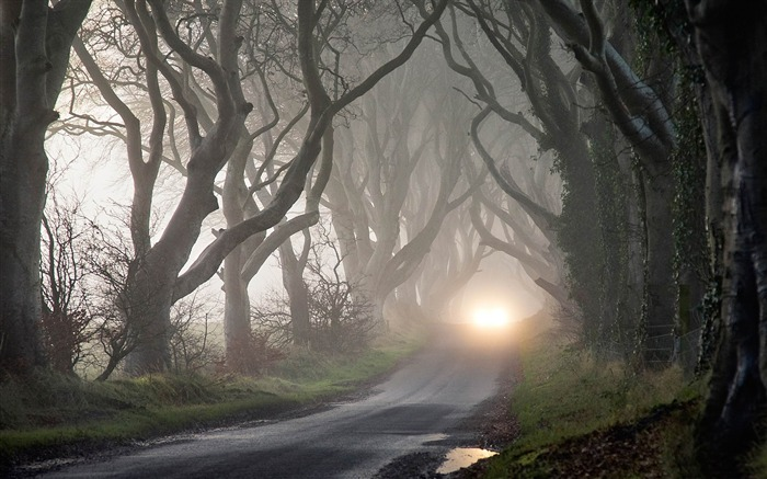 foggy road and tangled trees-Autumn Nature Wallpapers Views:8543