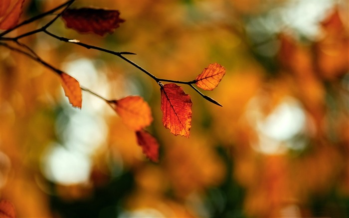 foliage-Autumn landscape widescreen wallpaper Views:6158 Date:10/16/2012 11:43:03 AM