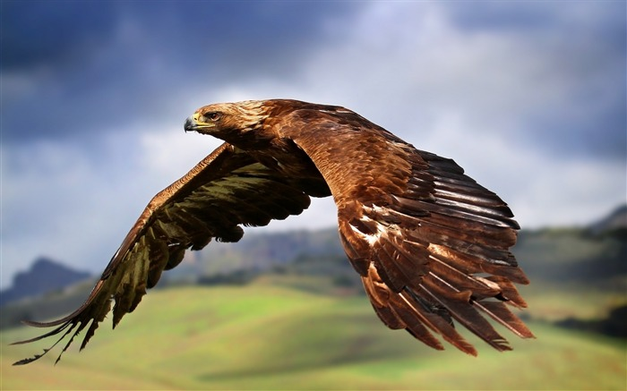 king of the skies-Animal Widescreen Wallpaper Views:6572
