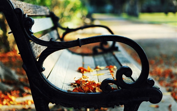 leaves on a bench-Autumn landscape widescreen wallpaper Views:5727 Date:10/16/2012 11:44:00 AM