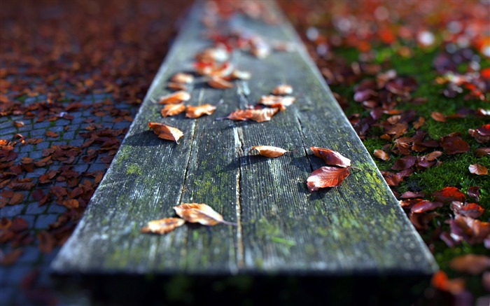 leaves on the bench-Autumn landscape widescreen wallpaper Views:5870 Date:10/16/2012 11:53:50 AM