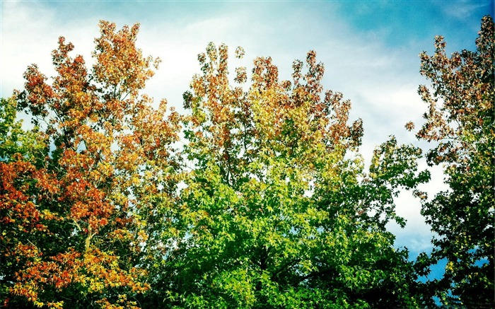 leaves turning already-Autumn landscape widescreen wallpaper Views:4881 Date:10/16/2012 11:54:39 AM