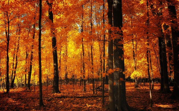 orange forest-Autumn Nature Wallpapers Views:16679