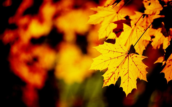 Golden autumn landscape Desktop Wallpapers Views:13935
